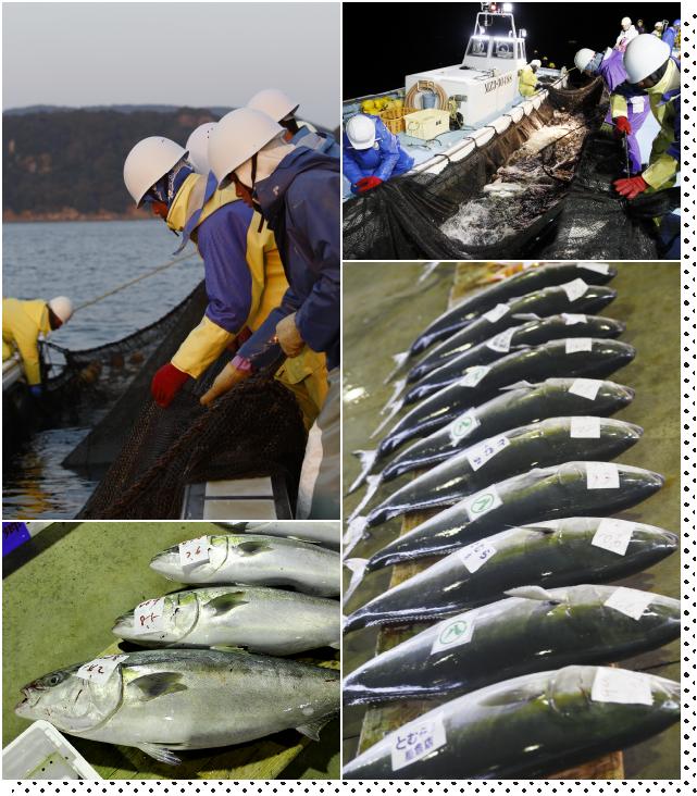 魚が活きいき。漁師も活きいき。